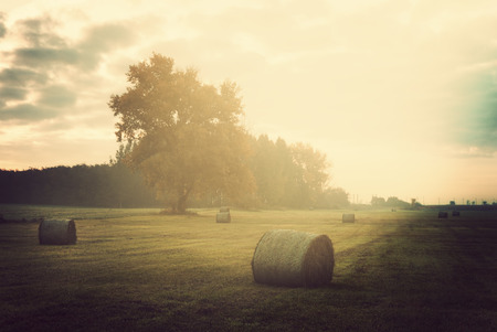 hayroll: Field
