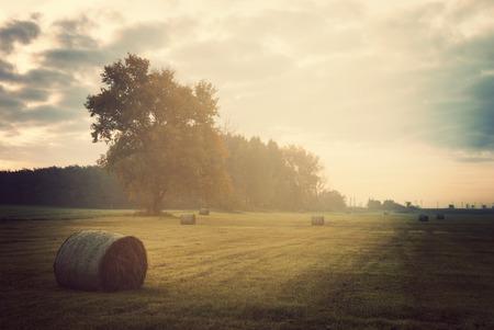 hayroll: Field in vintage color