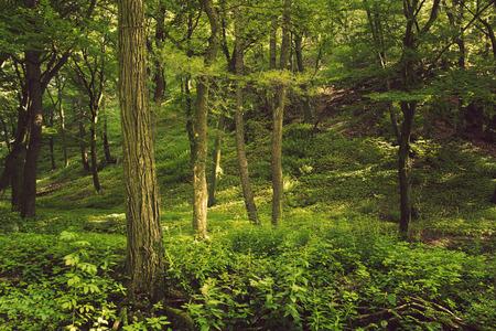 foresta: Foresta