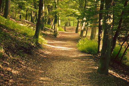European forest photo