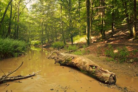 creek: Creek