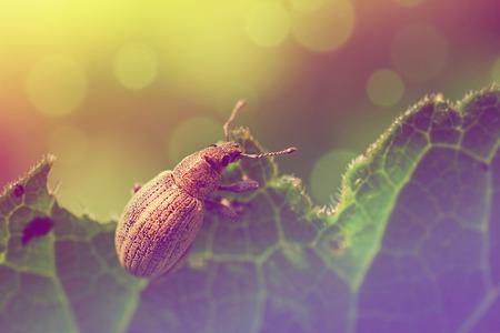 Bug on a leaf photo