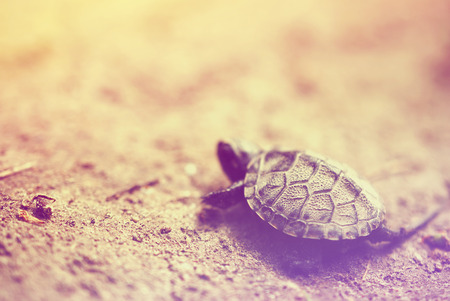 baby turtle: Baby turtle