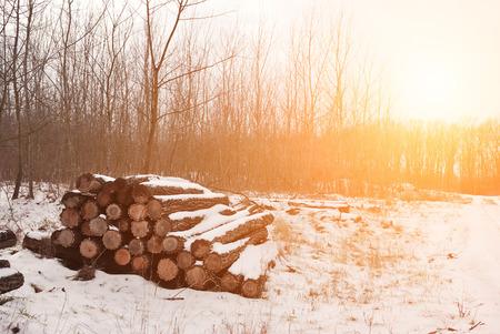 wood pile: Tree trunks