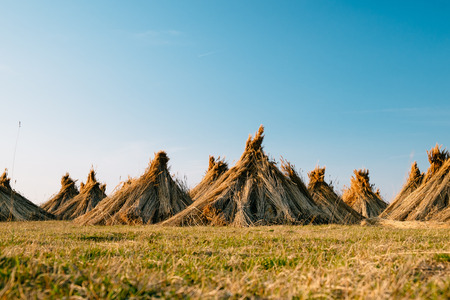 reed: Reed stack