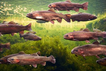 moray: Fish Stock Photo