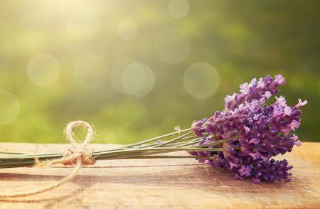 Lavender Foto de archivo