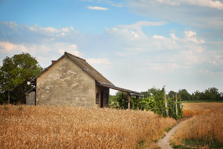wheatfield: House on a wheatfield