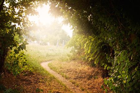 luz natural: Camino Foto de archivo