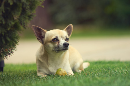 best shelter: Chihuahua