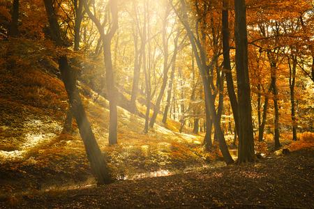 Autumn forest Standard-Bild
