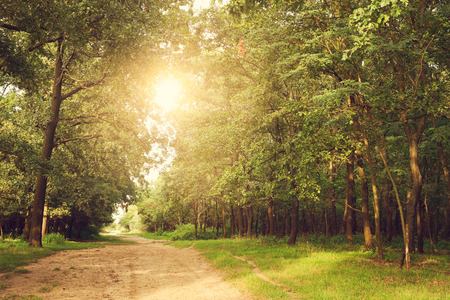 Pathway in the beautiful forest Stock Photo