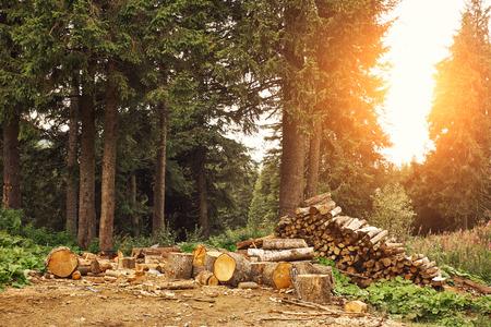 logging: Logging