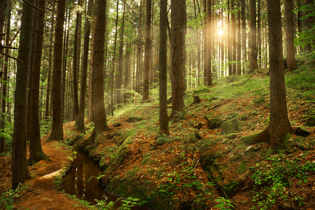 Beautiful dreamy forest photo