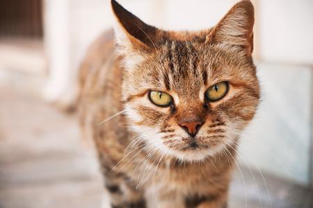 adoring: Cute cat