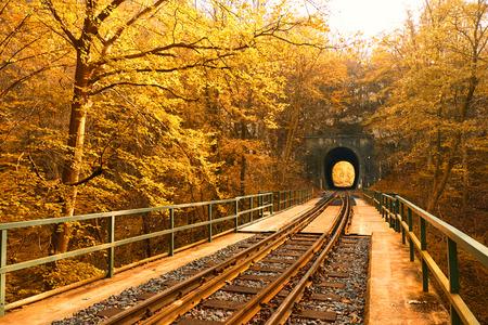 forest railway: Railway in autumn forest