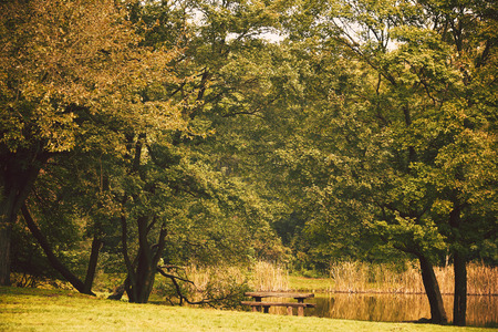 Bench in the park photo