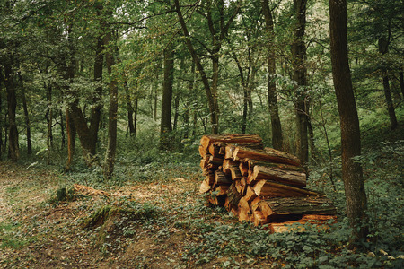woodpile: Woodpile in the forest