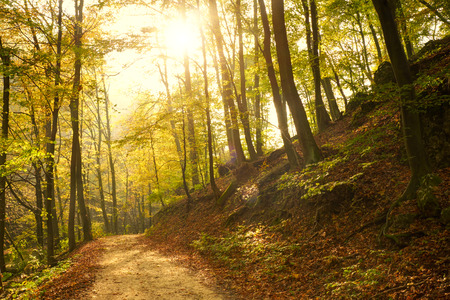 Autumn forest road photo