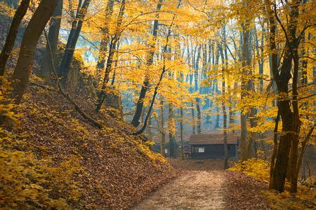 Autumn trail photo
