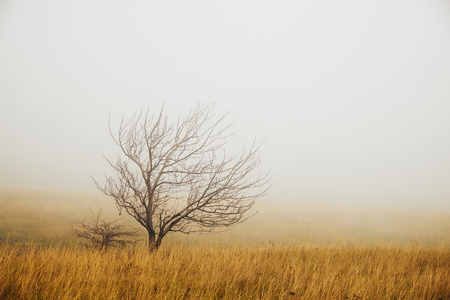 Lonely tree in the fog photo