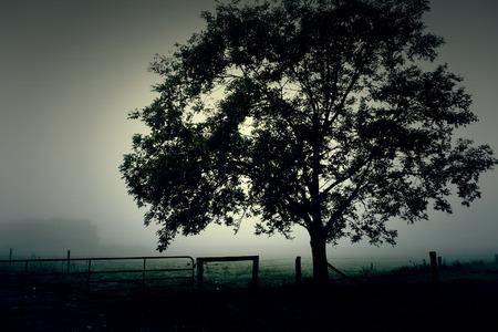 tree in field: Haunted foggy field