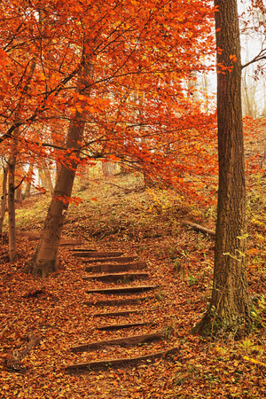 autumn forest: Sentiero bosco in autunno