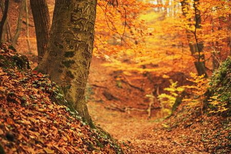 autumn forest: Autunno foresta