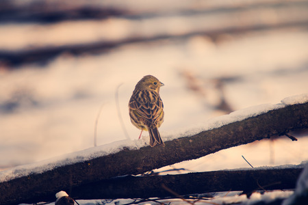 songster: Little bird Stock Photo