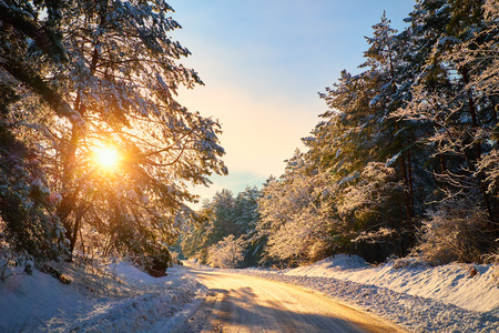 Winter road in forest photo