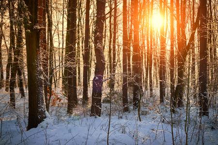 Frosty amazing winter forest photo