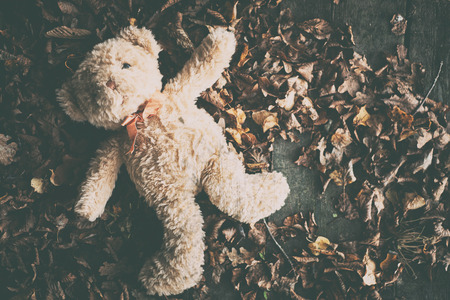 Teddy bear in leaves