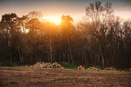 deforestacion: Industria de la Deforestaci�n Foto de archivo