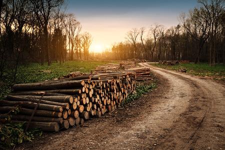 deforestacion: Industria de la Deforestación Foto de archivo