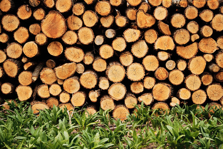 timber harvesting: Timber background Stock Photo