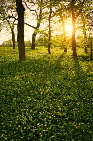 緑の森春の日光