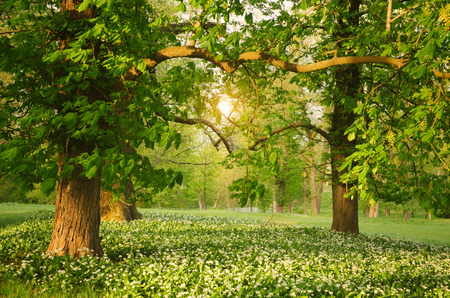 foliage tree: Sunlight in the green forest springtime Stock Photo