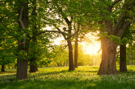huge tree: Sunlight in the green forest springtime Stock Photo