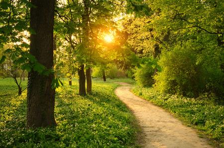 Chemin sur le parc Banque d'images - 39216867