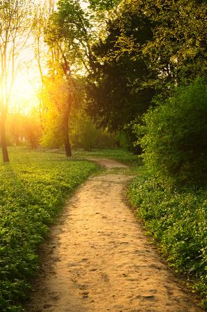 Camino en el parque Foto de archivo