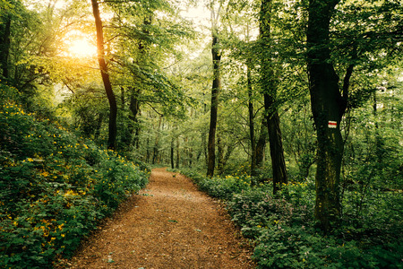 woodland path: Footpath in the forest
