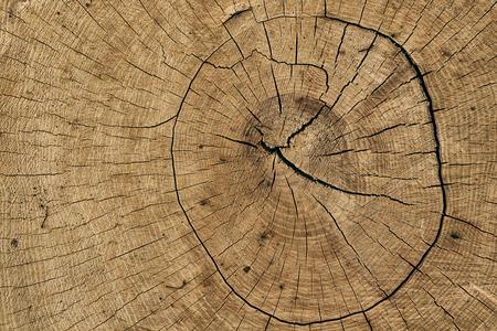 face in tree bark: Tree texture Stock Photo