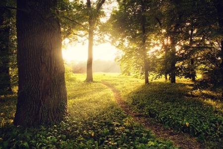 Sunlight on green forest