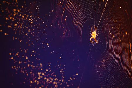 dewdrop: Spider