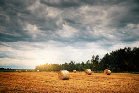 hayroll: Bales on a field Stock Photo
