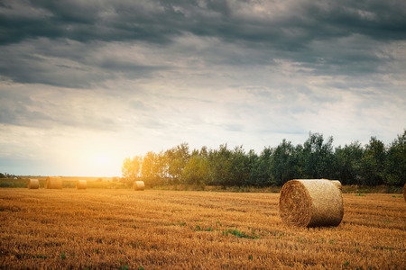 bales: Bales on a field Stock Photo