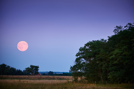 dark jungle green: Full moon over field Stock Photo