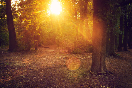 Sun rays in magical forest