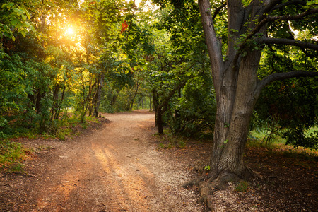 magical forest: Sun rays in magical forest