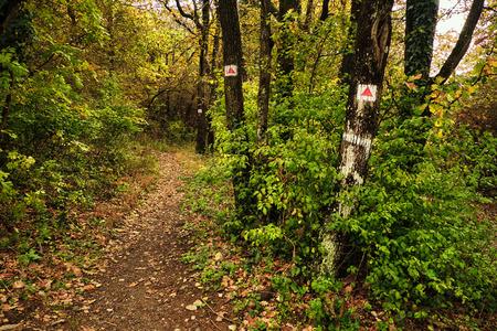 wooden trail sign: Tourist path